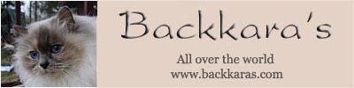 banner_backkaras4