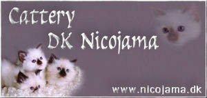 nico2_smallbanner